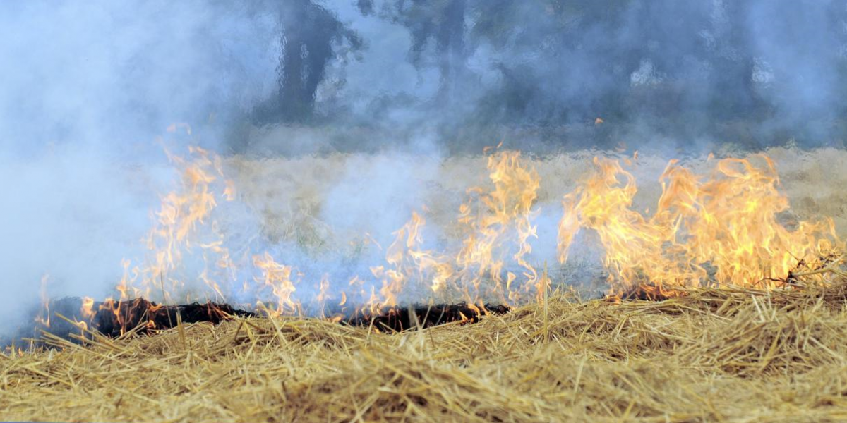 What Is the Solution to Punjab's Paddy Stubble Burning Problem?