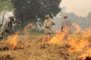 Punjab CM, SAD Chief In Heated Argument Over Stubble Burning in Punjab