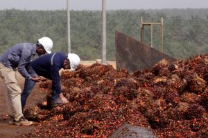 Palm Oil Imports: India Warns Malaysia That Bilateral Ties Are 'Factored' in Trade Transactions