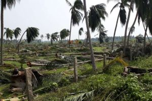 Cyclone Gaja Damaged One Crore Coconut Trees in Tamil Nadu