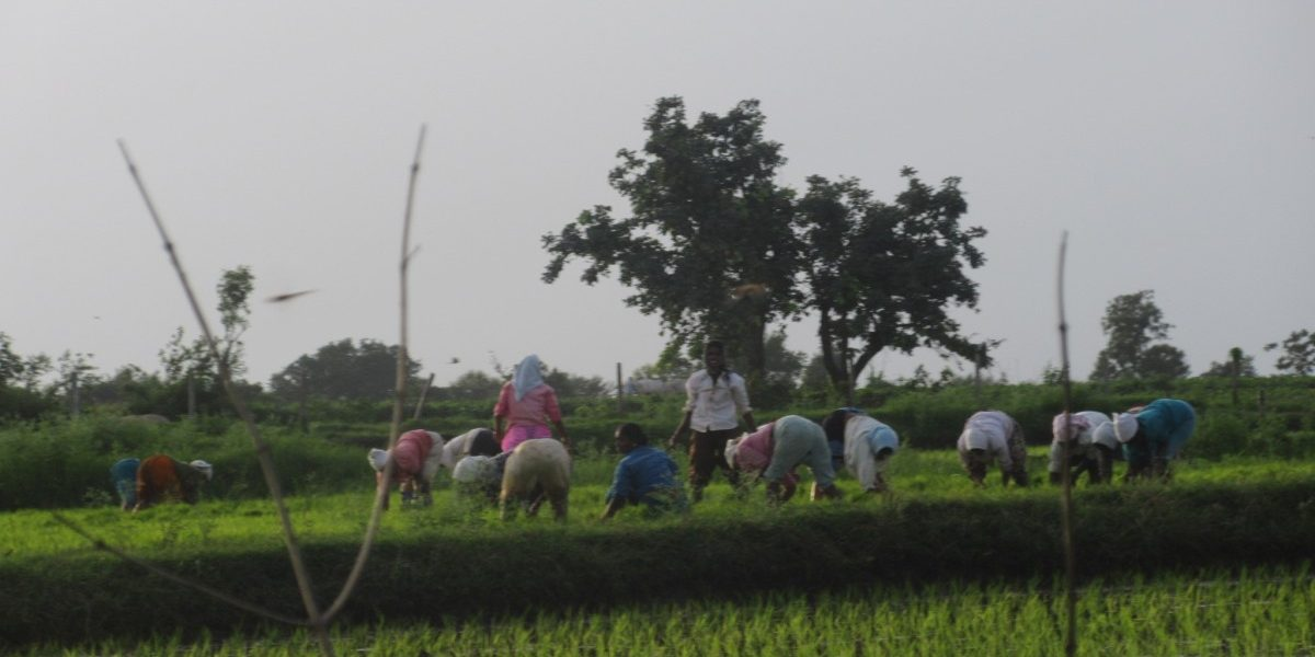 Telangana: Govt's Support to Farm Laws Will Only Heighten Rural Anger