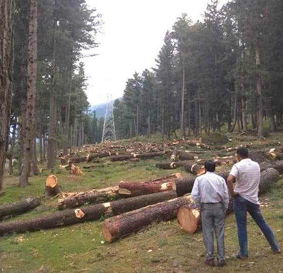 Trees chopped for the Alastang-Leh transmission line. Credit: Mudasir Ahmad