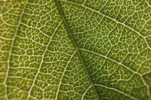 Tinkering With Photosynthesis, Scientists See 40% Jump in Plant Productivity