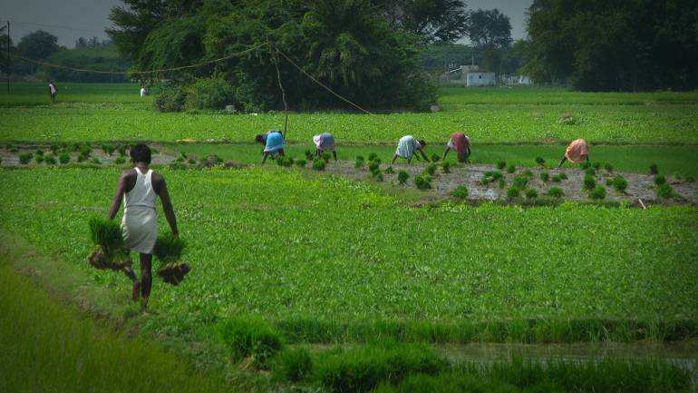 Indian Agriculture's Enduring Question: Just How Many Farmers Does the Country Have?