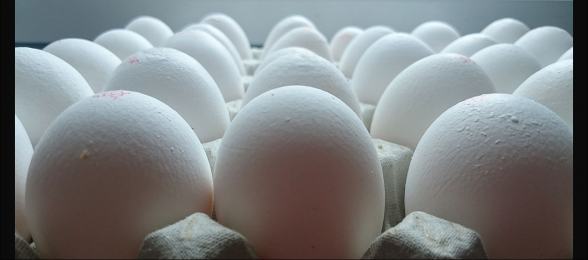 One Egg per Student Proves 'Too Expensive' for Jharkhand Government