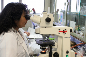 India Excels in Funding Neglected Disease Research: New Report