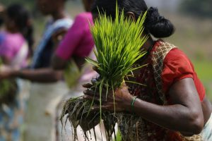 For Climate-Smart Agriculture to Succeed, Need to Take Into Account Social Dynamics
