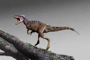 Colossal T. Rex's Evolutionary Great Uncle Was a Pint-Sized Predator