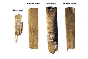 Made From Human Bone, World's 'Oldest' Tattooing Kit Found in Tonga