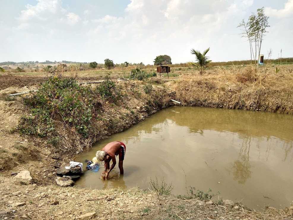 The rainwater harvesting pond can also be used by animals and people. Credit: Manu Moudgil