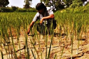 After 3-Year Delay, Government Releases Farmer Suicide Data