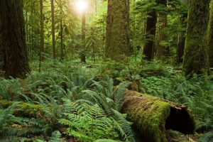 It's Wrongheaded to Protect Nature With Human-Style Rights