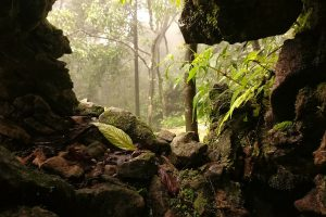 The Meghalayan Plateau Is a Geological Marvel Under Ecological Threat