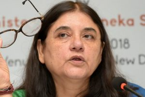 Dear Maneka Gandhi, Elections Are Not a 'Trade-off'