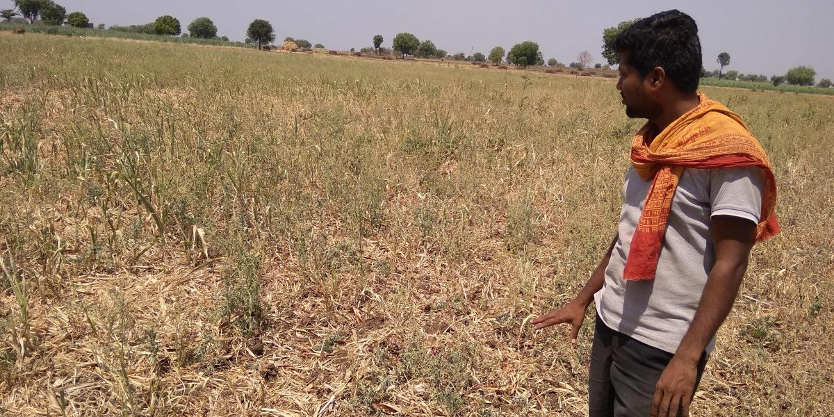 More Than a Year After Crop Failure, Maharashtra Farmers Still Wait for Insurance Payout