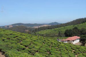 How British Sentimentality Shaped a Corner of the Nilgiris