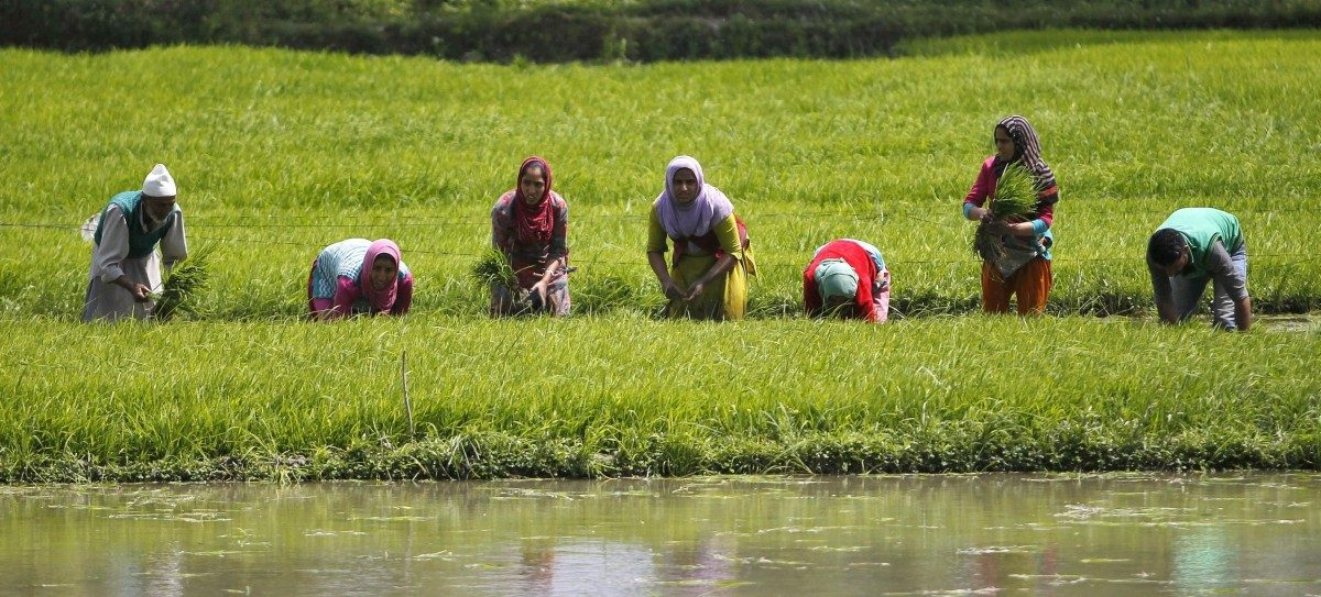 What Not to Expect for Agriculture in Budget 2021
