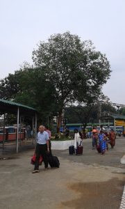 A jamun tree that had a crows nest in the Bangalore railway station. Credit: Harini Nagendra and Seema Mundoli