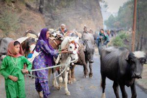 Dreaming of Peace Dividends: Revival of Shimla-MurreeLinkages