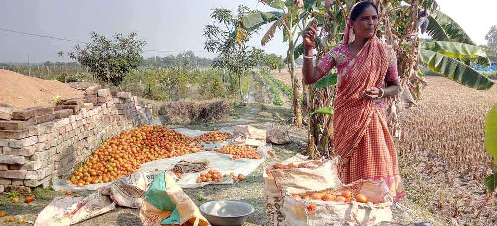 Fighting Soil Salinity: Land Shaping Techniques Benefit Sundarban Farmers