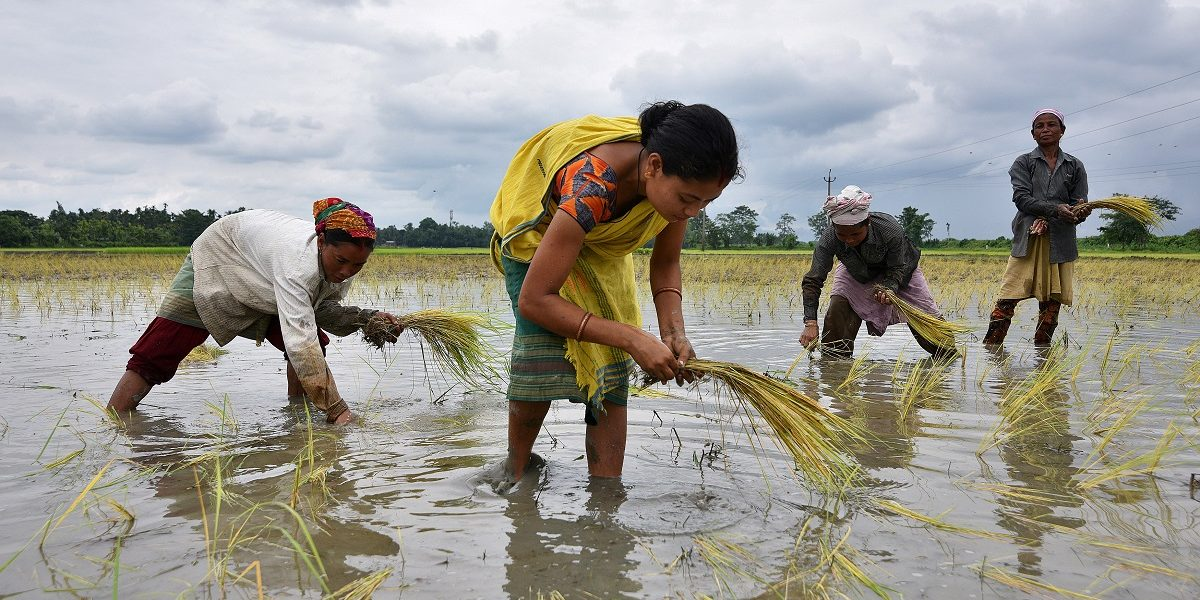 Punjab: Labour Shortage in Lockdown Reveals Fissures in Farm Economy Ahead of Paddy Sowing Season