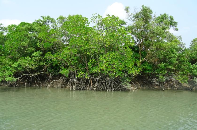 Bullet Train Project to Cost Maharashtra 54,000 Mangrove Trees