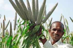 How Millets Can Make India's Food Basket More Climate-Resilient