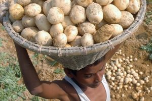 Potato Chips and Child Exploitation: A Story of Innocence Lost in Labour