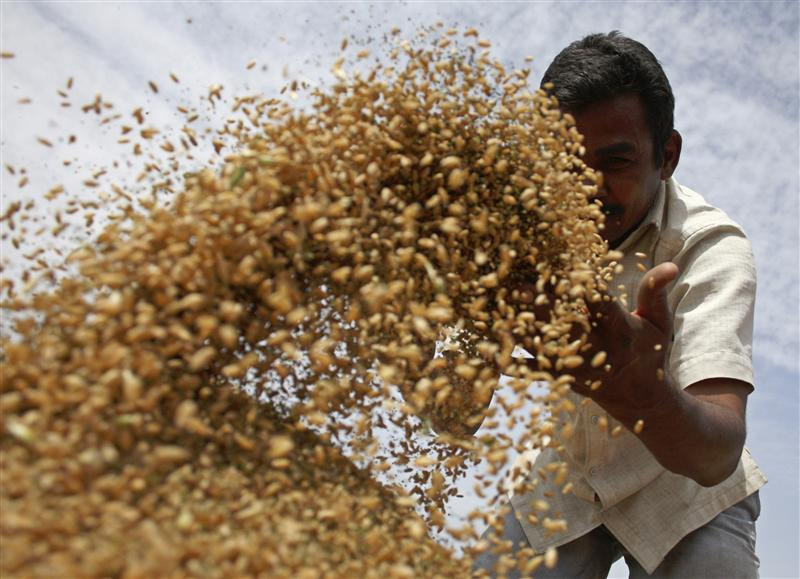 India's Bumper Wheat Crop Should be Giving Jitters to the Food Corporation of India