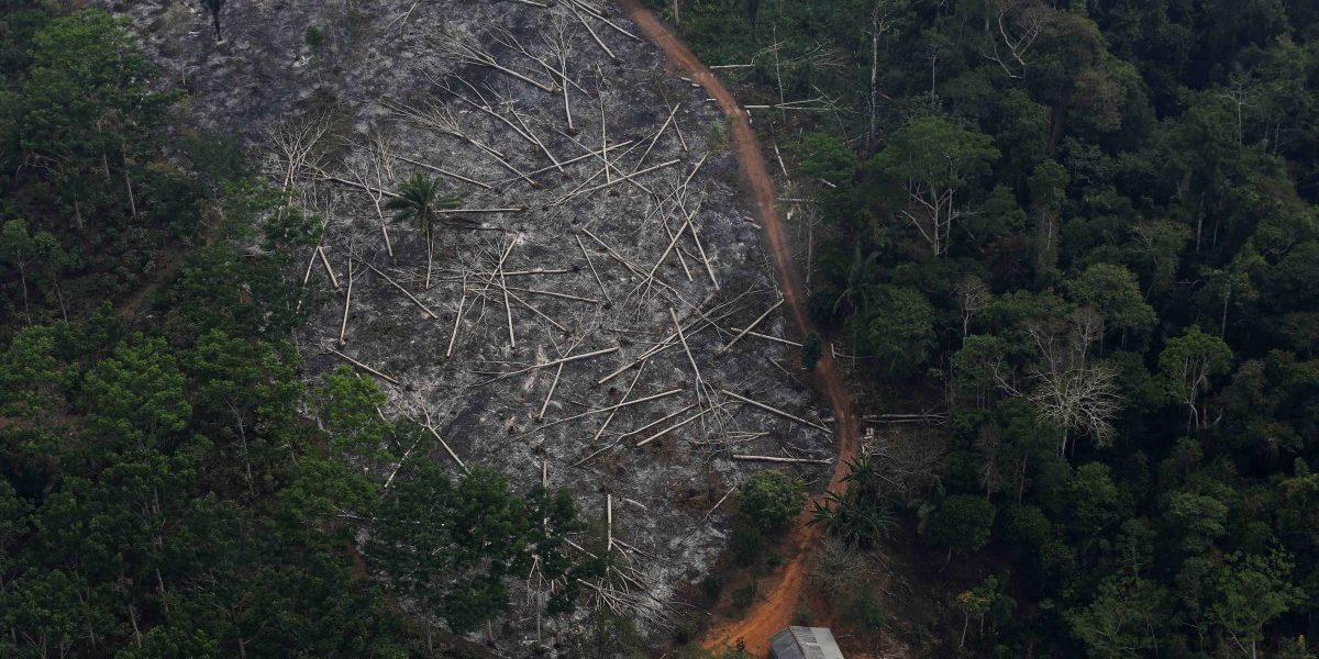 What the UN Can Do to Stop Brazil's Rapid Deforestation
