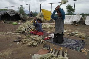 In Photos: Rajasthani Broom Makers Struggle to Make Ends Meet in Kashmir