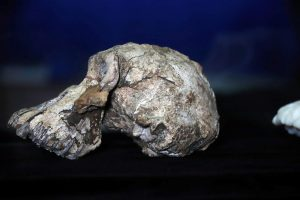 Skull of Ancient Human Ancestor Who Lived 3.8 Million Years Ago Unearthed