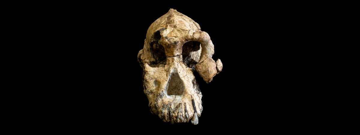 The Skull of Humanity's Oldest Known Ancestor Is Changing Evolutionary Beliefs