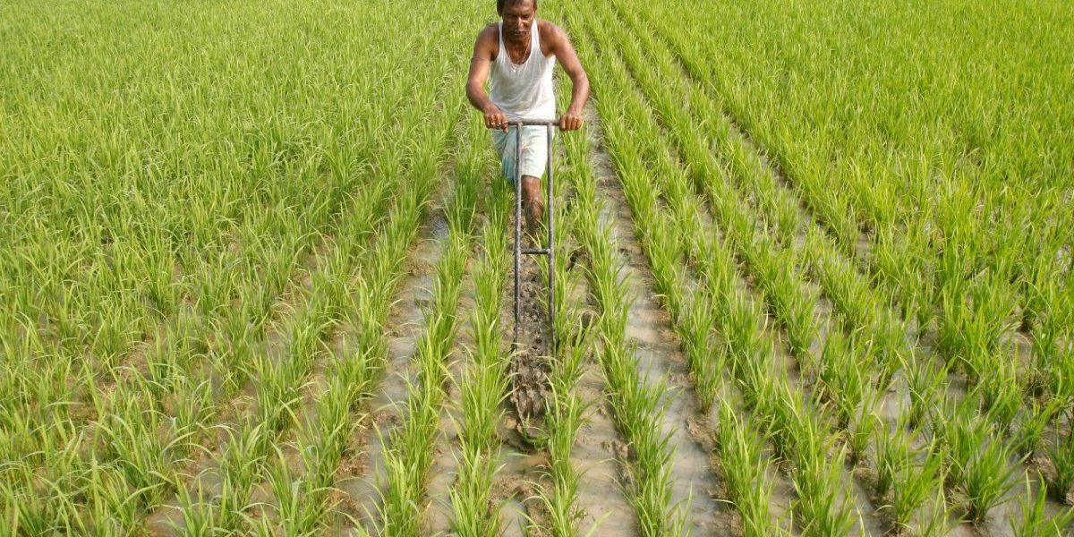 How India Can Improve Its Food Security After the Pandemic Passes