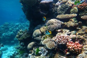 There Are 45 Reasons Why the Great Barrier Reef Is in Trouble
