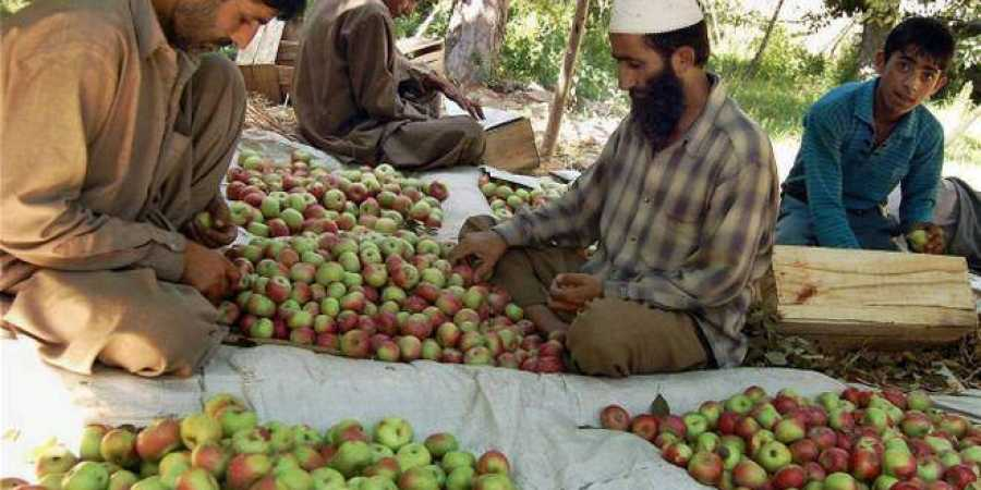 Kashmir: Lockdown Forces Apple Industry to Face More Challenges