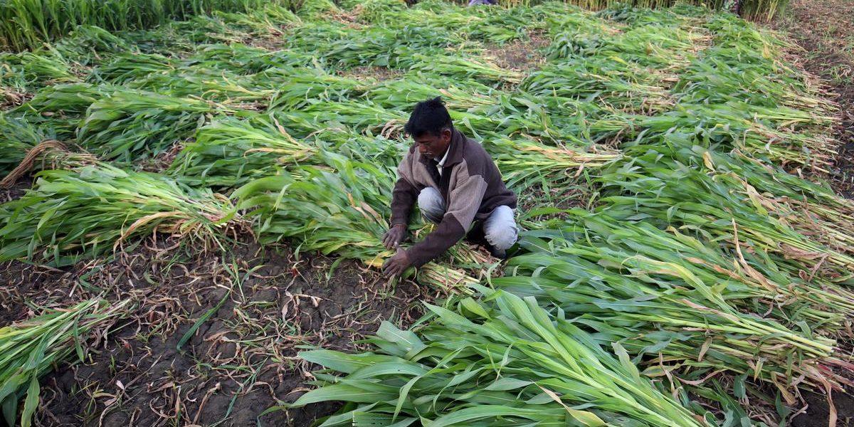 Over 7 Lakh Rajasthan Farmers Won't Get Short-Term Loans This Kharif Season