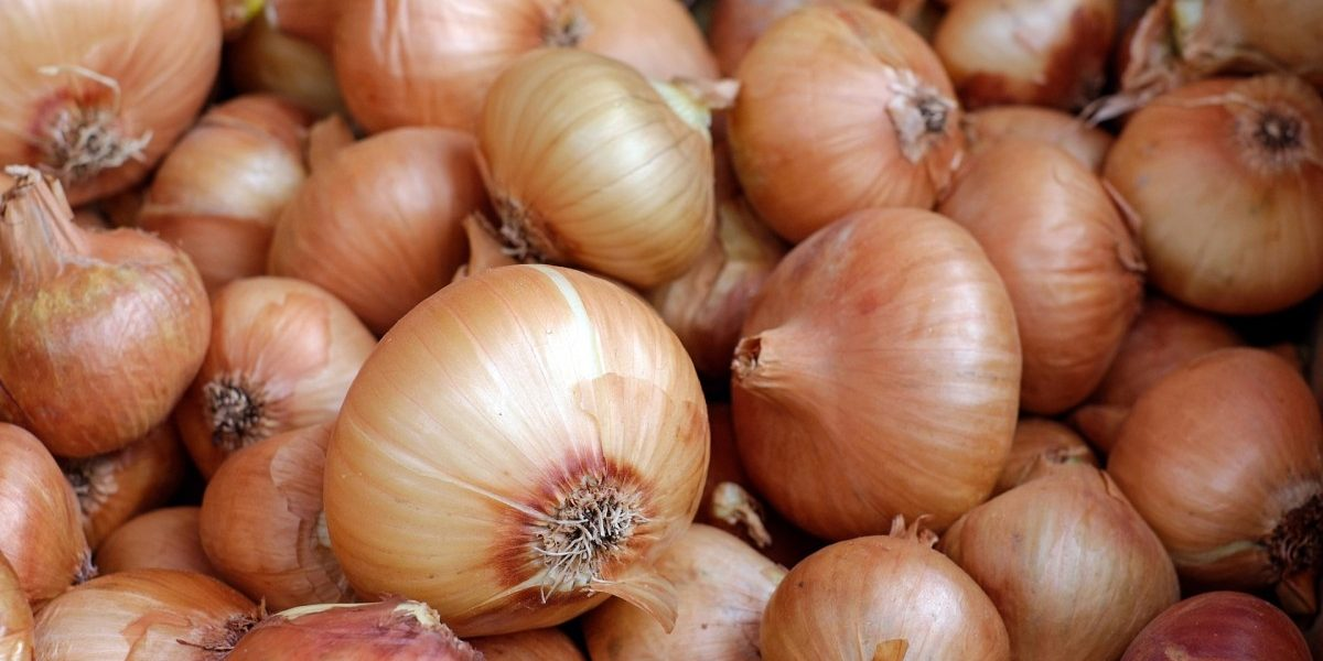 Government Bans Export of Onions to Curb Price Rise