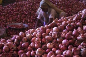 Centre's Measures to Control Onion Prices Will Hurt Farmers