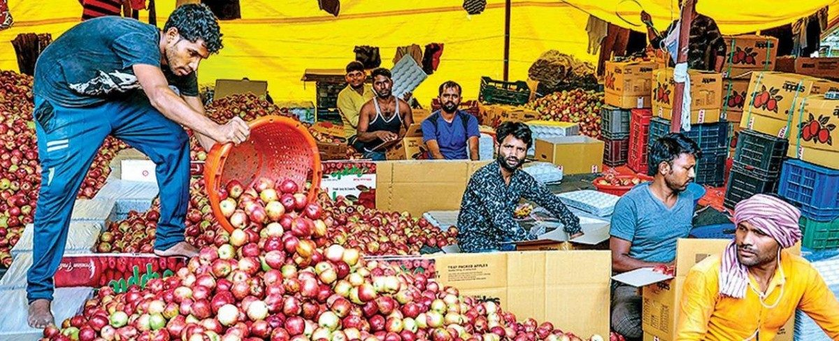 Kashmir: COVID-19 Lockdown Adds to Woes of Apple Growers and Traders
