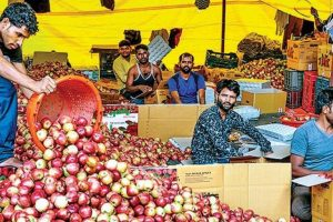 Fruit Growers Alarmed by Fresh Killings in South Kashmir, Harvest Grinds to a Halt