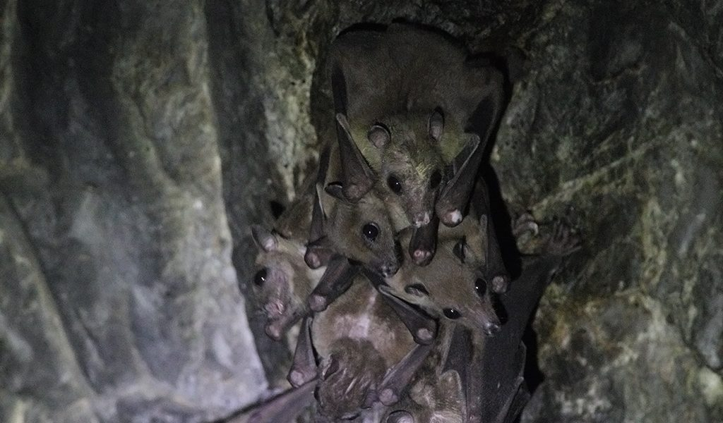 New Evidence That Humans and Bats Exchanged Deadly Filovirus in Nagaland