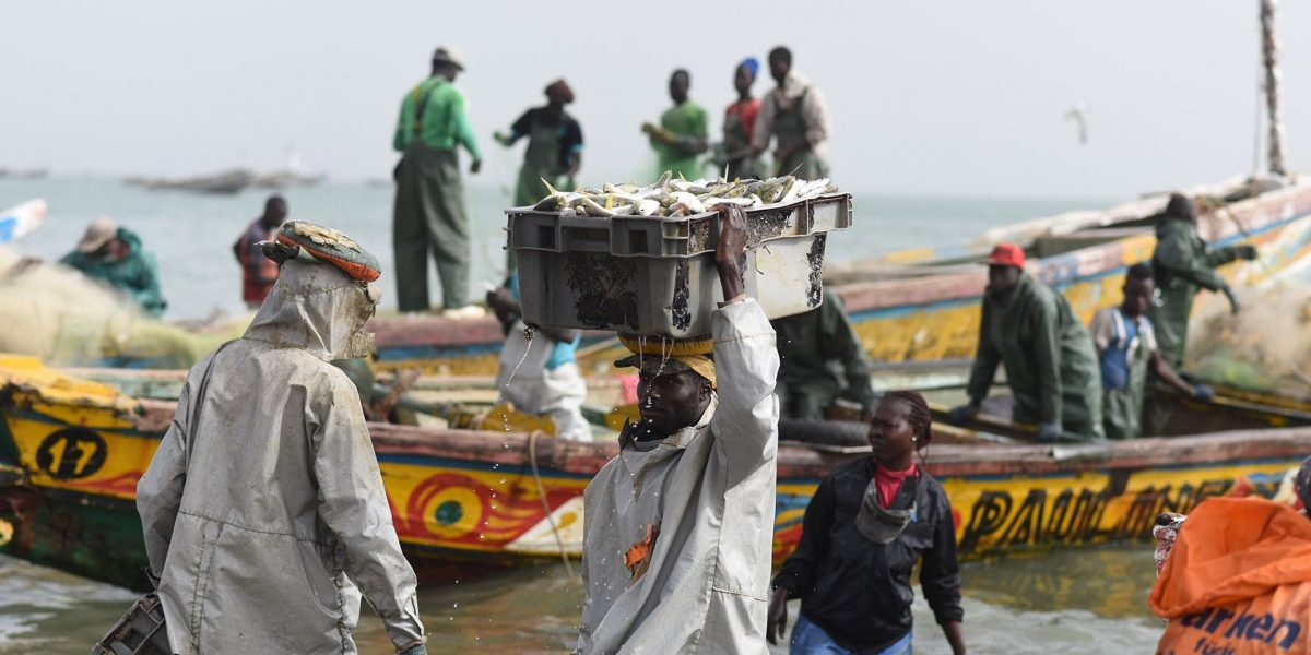EU Targets Fragile West African Fish Stocks
