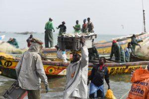 EU Targets Fragile West African Fish Stocks