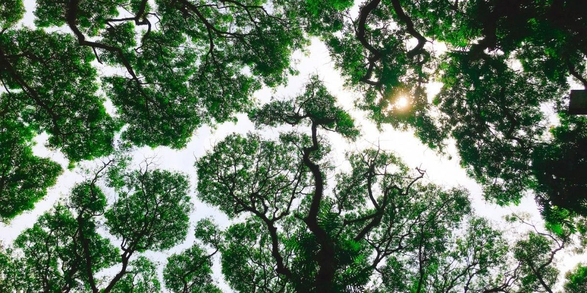 The 2019 State of Forests Report Tells a Distorted Story of India's Trees