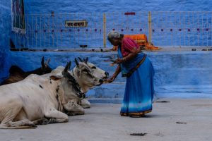 'Set up Cow Hostels in Urban Areas,' Cow Commission Tells Urban Development Ministry