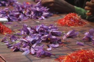 Why Kashmir's Saffron Fields Are Shrinking