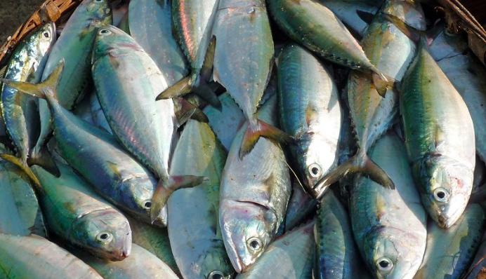 FSSAI Sets August 2020 Deadline For Standards on Formaldehyde in Fish