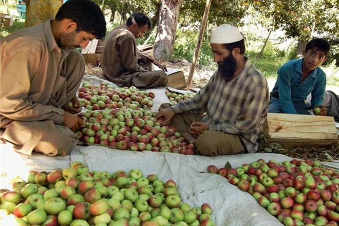 After August 5, Kashmir's Economy Has Suffered Rs 17,878 Crore in Losses