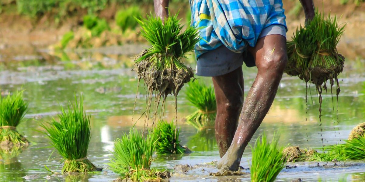 COVID-19 Crisis: To Help Farmers, Government Must Expand Ambit of PM Kisan Scheme